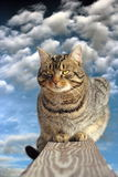 Binnenlandse kat op de omheining Royalty-vrije Stock Fotografie