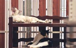 Binnenlandse Kattenslaap op plank, slaap hoog op de vloer stock afbeelding