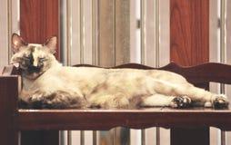 Binnenlandse Kattenslaap op plank, slaap hoog op de vloer stock foto's