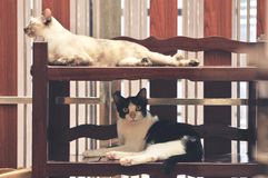 Binnenlandse Kattenslaap op plank, slaap hoog op de vloer stock afbeeldingen