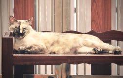Binnenlandse Kattenslaap op plank, slaap hoog op de vloer stock foto
