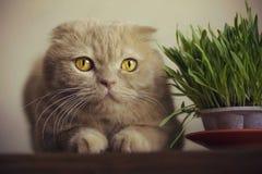 Binnenlandse kattenzitting op een lijst Royalty-vrije Stock Fotografie