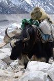 Binnenlandse Nepalese jakken met hakenkruissymbool, Himalayagebergte, Everest stock foto