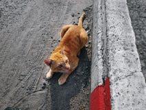 Binnenlandse Tabby Cat Cautiously Looking bij iets stock foto