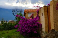 Binnenplaats en bloemen Royalty-vrije Stock Afbeelding
