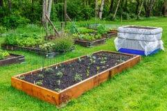 Binnenplaats het tuinieren Royalty-vrije Stock Afbeeldingen