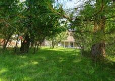 Binnenplaatstuin met bomen en groen gras Royalty-vrije Stock Afbeeldingen
