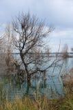 Binnenwater in de herfst Stock Foto