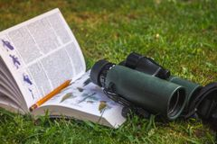 Binoculars and Bird Guide stock photo