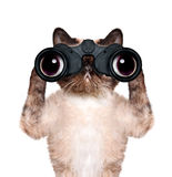 Binoculars cat searching, looking and observing with care Royalty Free Stock Photos