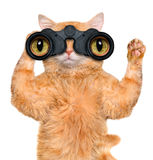 Binoculars cat searching, looking and observing with care Stock Photography