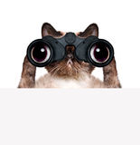 Binoculars cat searching, looking and observing with care Royalty Free Stock Images