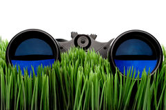Binoculars on green grass Stock Image