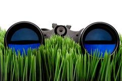 Binoculars on green grass Stock Image