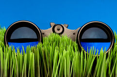 Binoculars on green grass Stock Photos