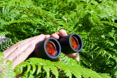 Binoculars in hand from the bushes Stock Photography