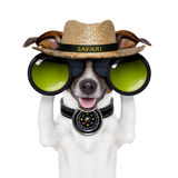 Binoculars safari compass dog watching Stock Photography
