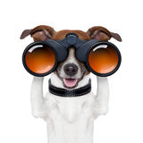 Binoculars  searching looking observing  dog Royalty Free Stock Photos