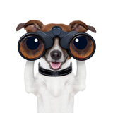 Binoculars  searching looking observing  dog Royalty Free Stock Photo