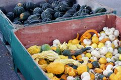 Bins of acorn squash, white pumpkins, decorative gourds for sale Stock Photography