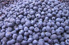 Bins of Blue Berries Stock Image