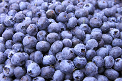 Bins of Blue Berries Royalty Free Stock Photo