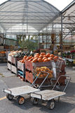 Bins full of pumpkins at farmer's market Royalty Free Stock Images