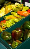 Bins of peppers Stock Image