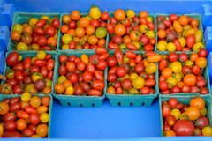 Bins with tomatoes. For sale to the market royalty free stock image