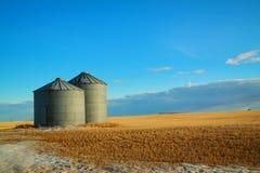 Binsa de grain wiating pour le dégel de ressort photo libre de droits
