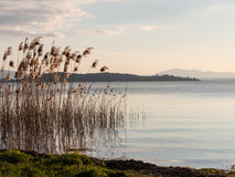 Binsen durch den See Stockfotos