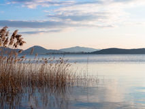 Binsen im See an der Dämmerung Lizenzfreie Stockfotos