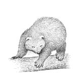 Binturong Engraving Illustration Stock Photography
