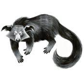 Binturong - illustrazione animale Fotografia Stock Libera da Diritti