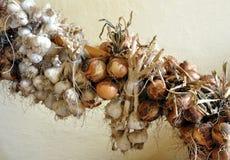 Bio ajo y cebollas Imágenes de archivo libres de regalías