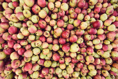 Bio apple harvest Royalty Free Stock Photography