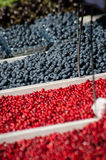 Bio- bacche e frutta al mercato all'aperto dell'agricoltore Immagine Stock Libera da Diritti