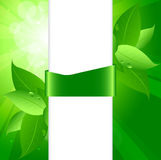 Bio background. Green-white bio background for your text Royalty Free Stock Photography
