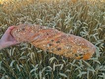 Bio bread Stock Image