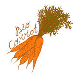 Bio carrot. S with leaves in a retro style on a white background Stock Image