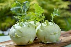 Bio- cavolo rapa maturo fresco del cavolo bianco dall'azienda agricola organica, fine su immagine stock