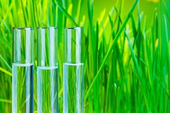 Bio chemistry test. Many glass test tubes  with fresh green spring grass on background Royalty Free Stock Photo