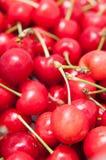 Bio cherries. Fresh bio cherries for a background Stock Images