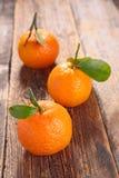 Bio clementine Royalty Free Stock Photo