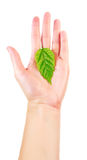 Bio concept - woman hand with green leaf. Isolated on white Stock Photo