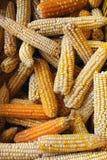Bio corn Royalty Free Stock Photo