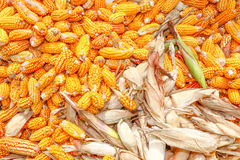 Bio corn Stock Images