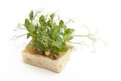 Bio- crescione fresco di Affilla fotografia stock