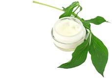 Bio cuidado de piel poner crema Imagen de archivo libre de regalías