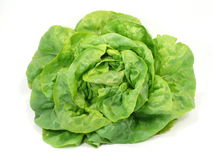 Bio cultivation. Green salad from bio cultivation Stock Photography